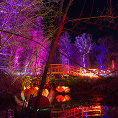 Things to do on your holiday - Robin Hill Festival of Light  Image
