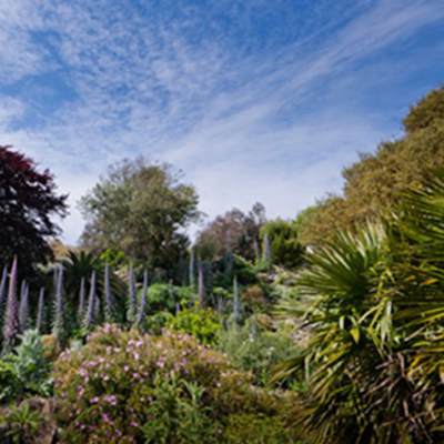 Places to go on your holiday - Ventnor Botanical Gardens  Image